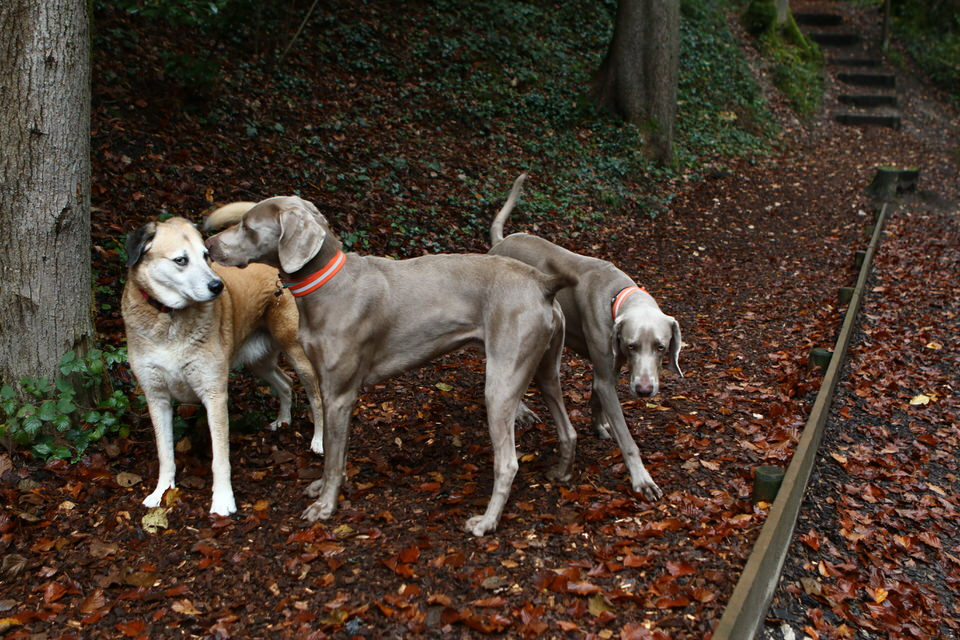 rencontre canines