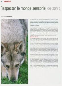 Chien magazine Respectez le monde sensoriel de son chien page 1