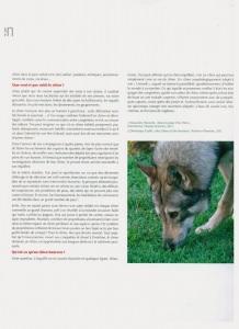 Chien magazine Respectez le monde sensoriel de son chien page 22